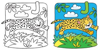 Little cheetah or jaguar coloring book. Alphabet J Stock Image