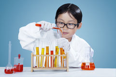 Little chemist makes research in the lab. Attractive little chemist wearing white coat and doing chemistry research in the laboratory Royalty Free Stock Photography