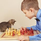 Little chessplayer with kitten plays chess. Royalty Free Stock Images
