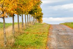 Little chestnut trees alley along road on horizon Stock Images
