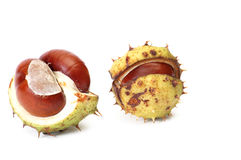 Little chestnuts on a white. Royalty Free Stock Photography