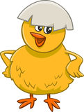 Little chick cartoon character Royalty Free Stock Photos