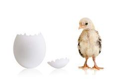 Little chick Stock Photos