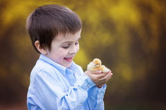 Little chick in child hands Stock Images