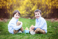 Little chick in child hands, two boys watching the chicks Stock Images