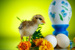 Little chick with daisies Stock Photo