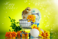 Little chick with daisies Royalty Free Stock Photos