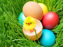 Little chick on eggs in green grass Royalty Free Stock Images