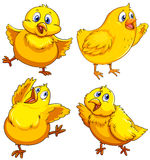 Little chick looking happy Royalty Free Stock Images