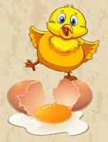 Little chick and raw egg Stock Images