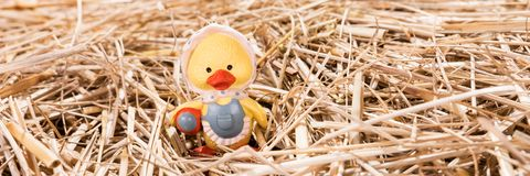 Little chick in the straw. Easter background Royalty Free Stock Image