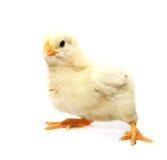 A little chicken Stock Photos