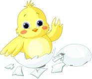 Little chicken. Cute little chicken sitting in an egg Stock Photos