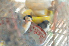 Little Chicken. S stay in cage Stock Photos