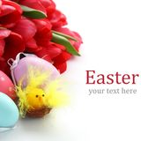 Little chicken, colorful easter eggs and pink tulips Stock Images