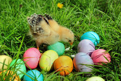 Little chicken with colorful eggs on green lawn Stock Photography