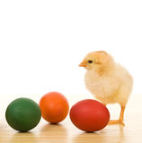 Little chicken with dyed easter eggs Stock Photography