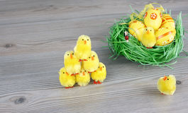 Little chicken and easter eggs Stock Photo