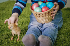 Little chicken and Easter eggs in the hands of the baby royalty free stock photo