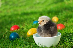 Little chicken with eggs Royalty Free Stock Photography