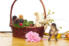 Little chicken in a floral basket Stock Photography