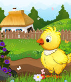 Little chicken on a green meadow Stock Photography