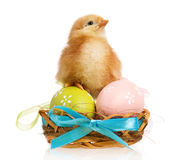 Little chicken in nest with Easter eggs Royalty Free Stock Images