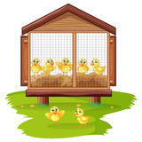 Little chicks in chicken coop stock illustration