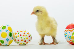Little chicks and Easter eggs Stock Photos
