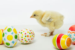 Little chicks and Easter eggs Stock Image