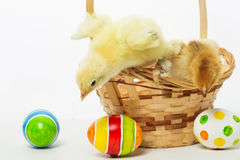 Little chicks and Easter eggs Stock Photography