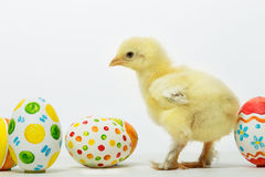 Little chicks and Easter eggs Royalty Free Stock Photography
