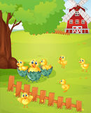 Little chicks on the farmyard Royalty Free Stock Photo