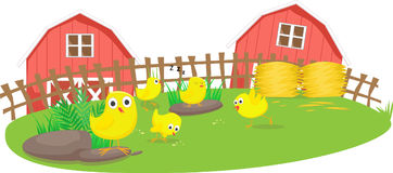 Little chicks play in the farm. Vector Illustration of Little chicks play in the farm Stock Image