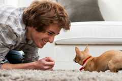 Little chihuahua having fun and games Stock Images