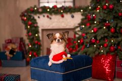 Dog new year stock image