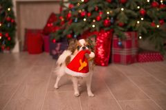 Dog new year royalty free stock photography