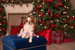 Dog new year royalty free stock image