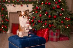 Dog new year stock images