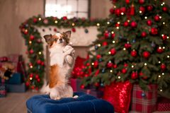 Dog new year royalty free stock images