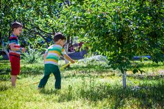 Little child, adorable blonde toddler boy, watering the plants, beautiful apple tree stock photos