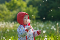 Little child blowing on a dandelion Stock Images