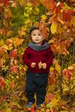 Little child boy stands near grid in park and holds yellow leaf Royalty Free Stock Images