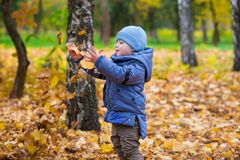 Little child boy walks on fallen colorful leaves Stock Photography