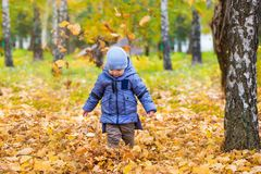 Little child boy walks on fallen colorful leaves Stock Images