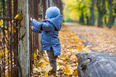 Little child boy 1 years old walks on fallen leaves Royalty Free Stock Photography