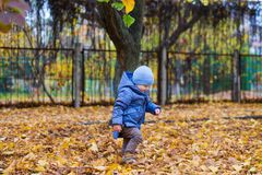 Little child boy 1 years old walks on fallen colorful leaves Royalty Free Stock Image
