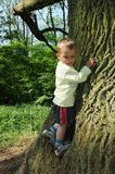 Little child climbing big tree. Little child, a young boy, climbing a big tree and having fun Royalty Free Stock Images