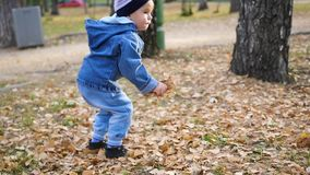 The little child collects yellow leaves in the Park. The child collects yellow leaves in the Park stock video