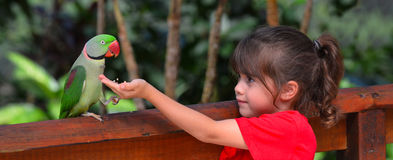 Little child feeds a Alexandrine Parrot Stock Photos